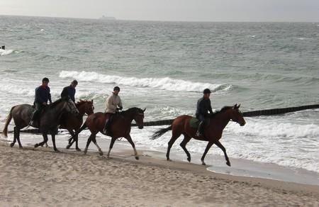 pferde am Strand bei Sellin
