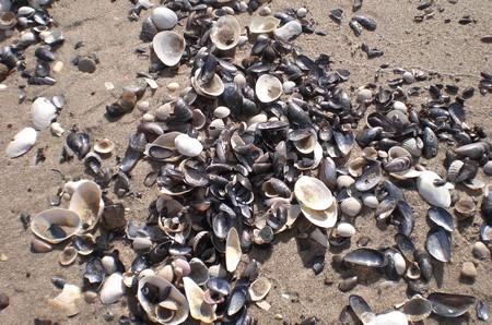 muscheln am strand bei göhren